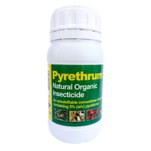 Pyrethrum Insecticide Plant Protection against Flies Beetles Caterpillar Pests